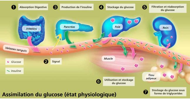 Très bonne synthèse du site www.dinnosante.fr