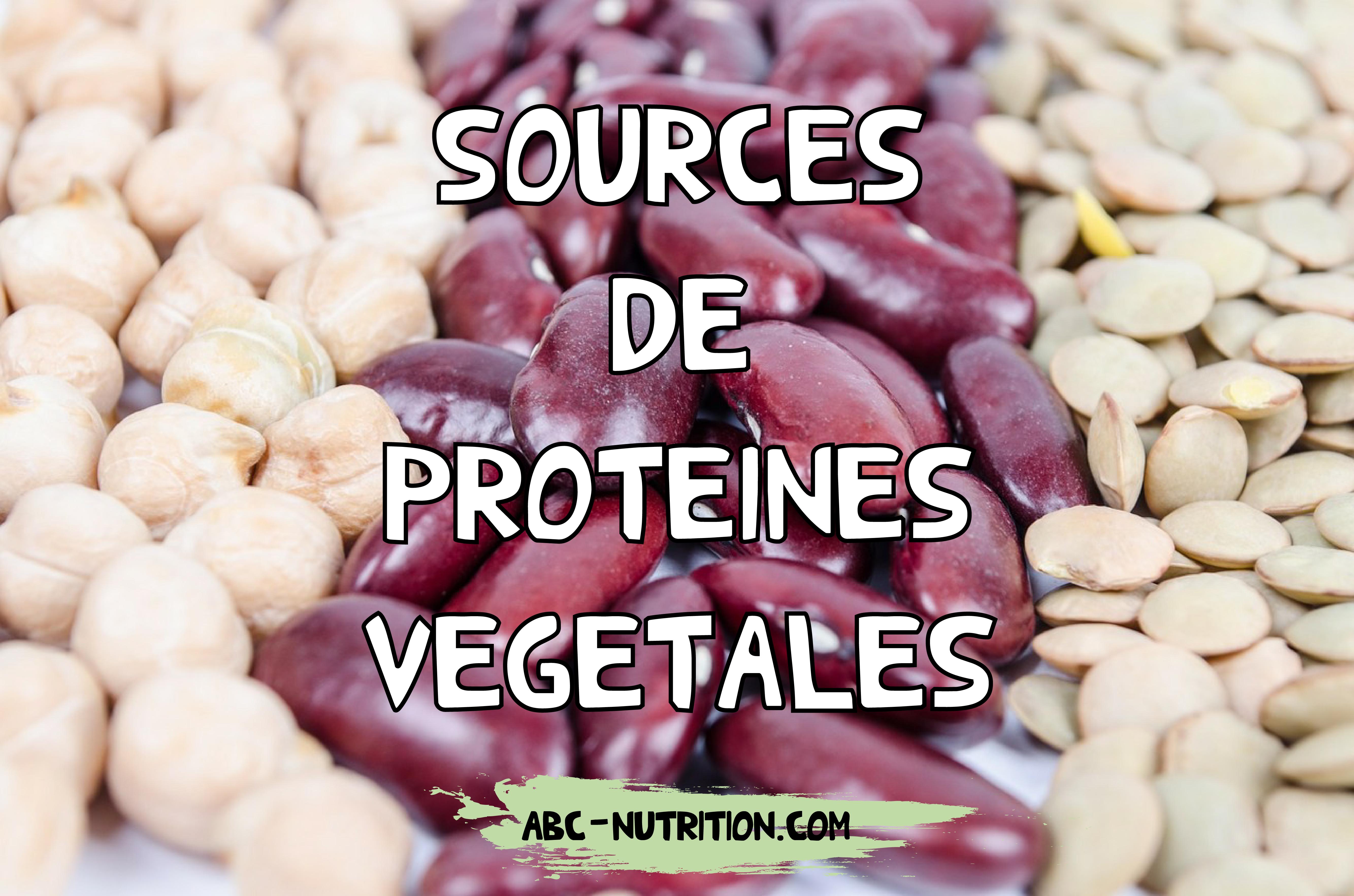Protéines végétales – Guide complet