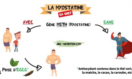 Myostatine : la protéine qui vous empêche de devenir fort et musclé comme un gorille